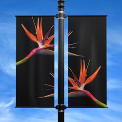 Birds of Paradise Double Street Pole Banner, DEKCHBPDB2448V