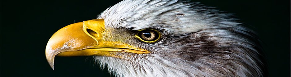 Grand photo of a bald eagle by Jamie King